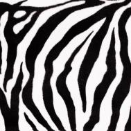 ZOO zebra