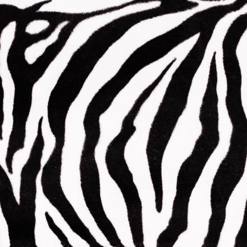 Látka ZOO motiv Zebra